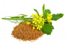 Mustard-seeds-2
