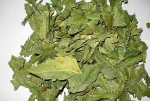 Dried-leaves-of-Neem