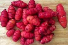 New-Zealand-Yam-tuberroot