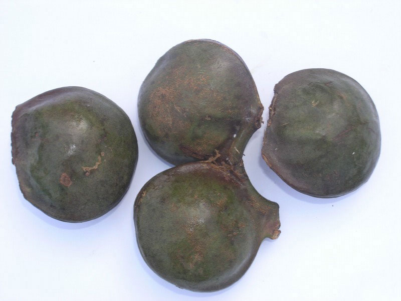 Fruits-of-Ngapi-Nut-tree
