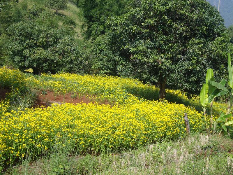 Niger-seeds-farm