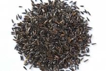 Niger-seeds