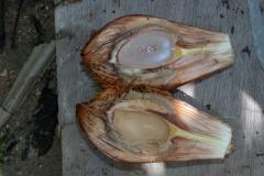Half-cut-Nipa-Palm