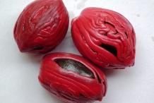 Mace-of-Nutmeg