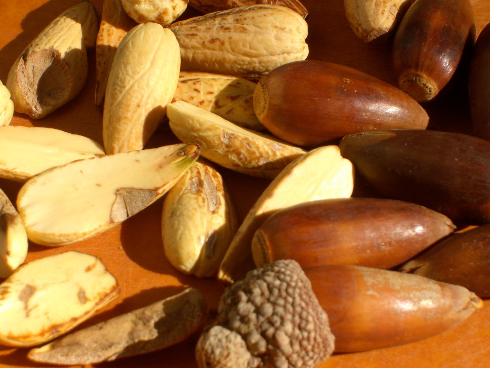 Oak-nuts