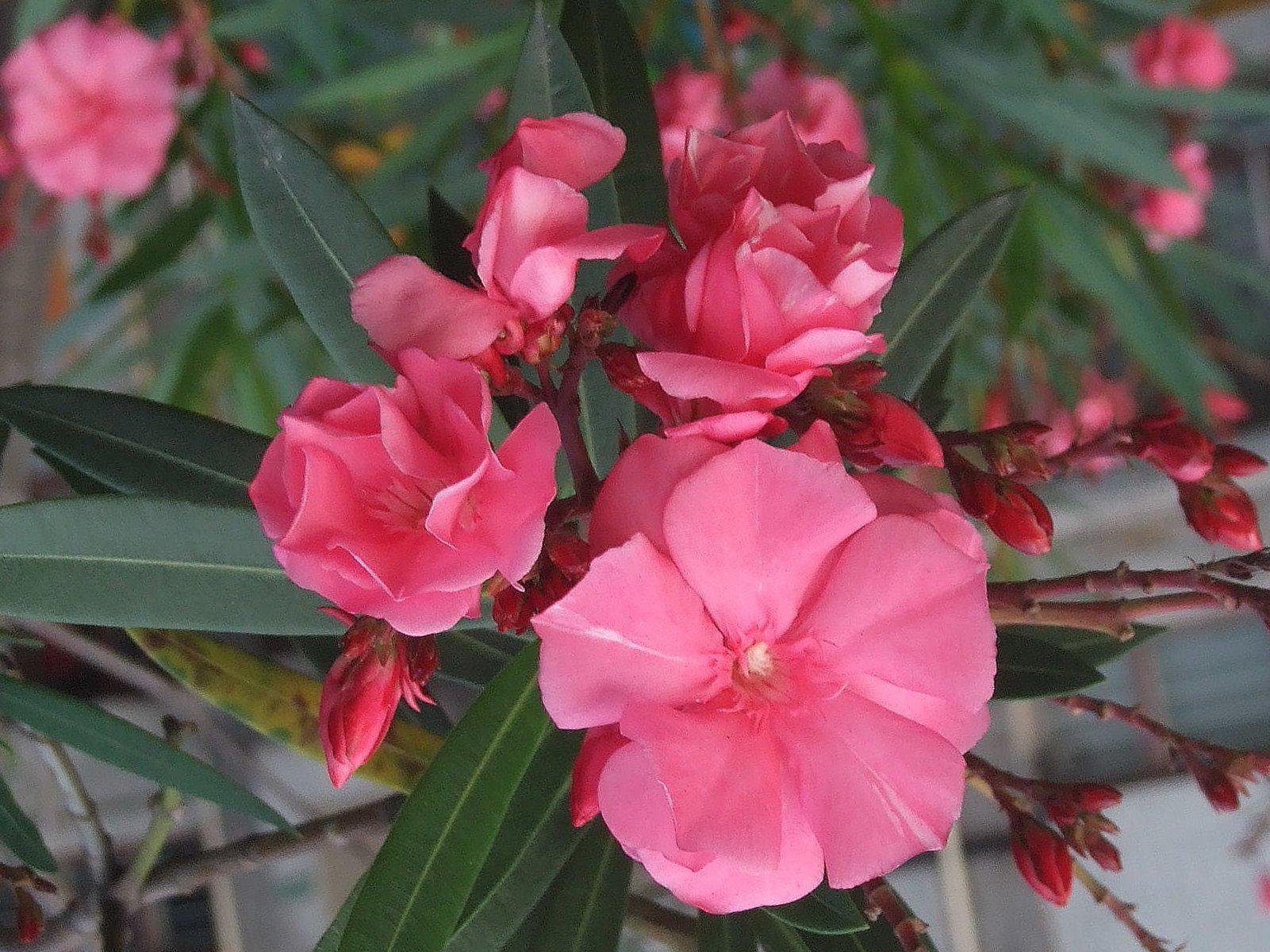 Close-up-flower