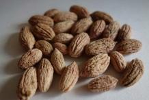 Olive-seeds