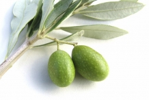 Green-olive-fruit