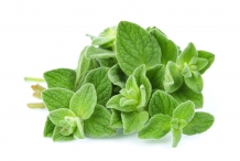 Leaves-of-Oregano