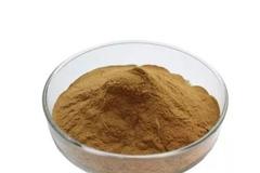 Osha-root-powder