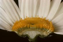Closer-view-of-half-cut-flower