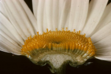 Closer-view-of-half-cut-flower