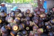 Palmyra-Fruits-sold-in-Market