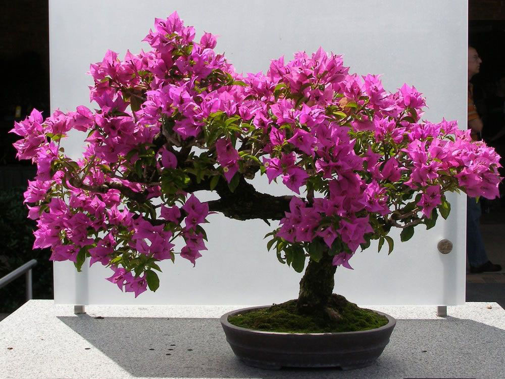 Paper-flower-bonsai