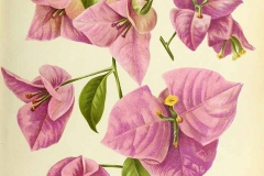 Plant-Illustration-of-Paper-flower