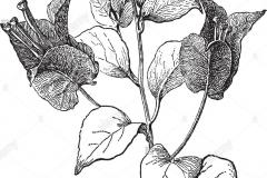Sketch-of-Paper-flower