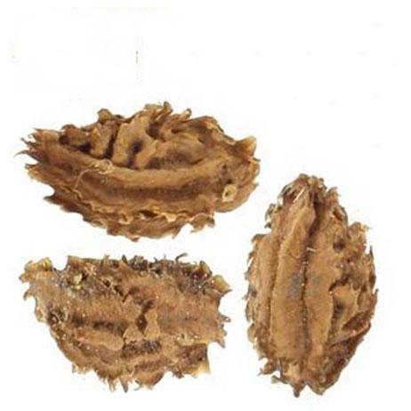 Seeds-of-Pareira