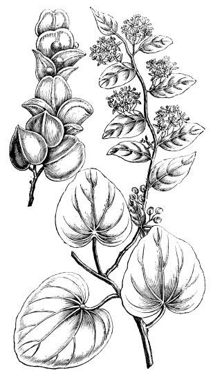 Sketch-of-Pareira