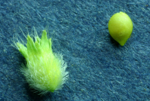 Parsley-Piert-Fruit