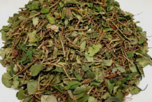 Partridge-Berry-Herb-Cut