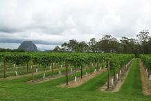 Passion-fruit-farm