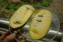 Half-cut-paw-paw-fruit