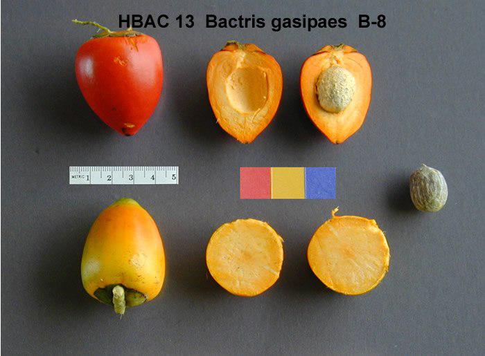 Peach-palm-half-fruit