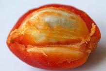 Half-cut-Peanut-Butter-Fruit