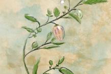 Plant-Illustration-of-Pepino-melon