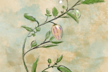 Plant-Illustration-of-Pepino-melon