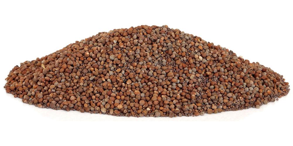 Perilla seeds