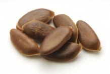 Persimmon-seeds