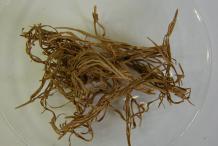 Dried--Pheasant's-Eye-herb