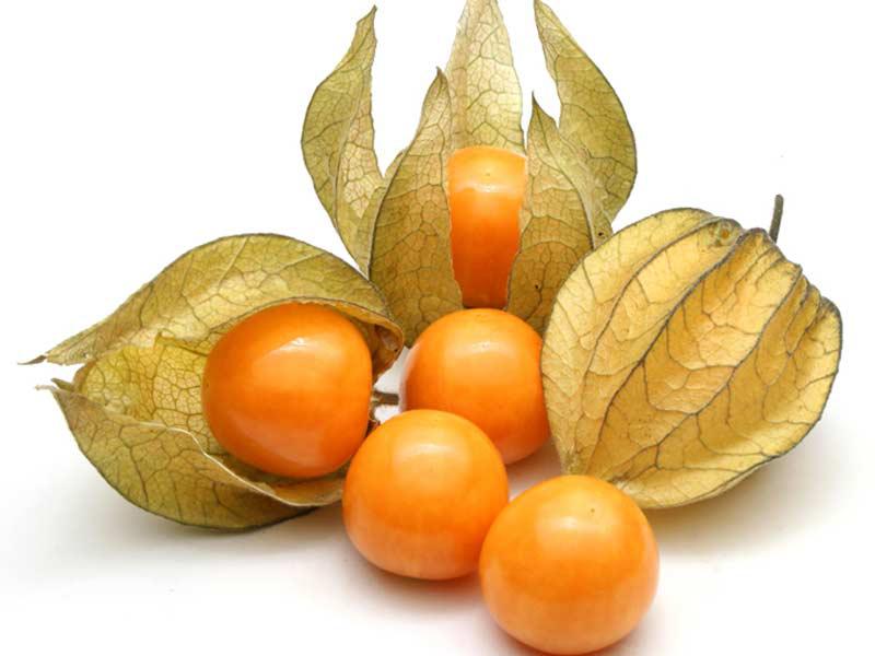 Physalis-fruit