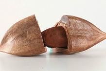 Pili-nut-shell