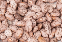Seeds-of-Pinto-beans