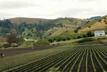 Pistachio-farm