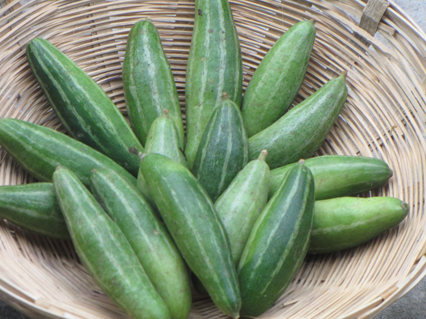Pointed-gourd-in-the-basket