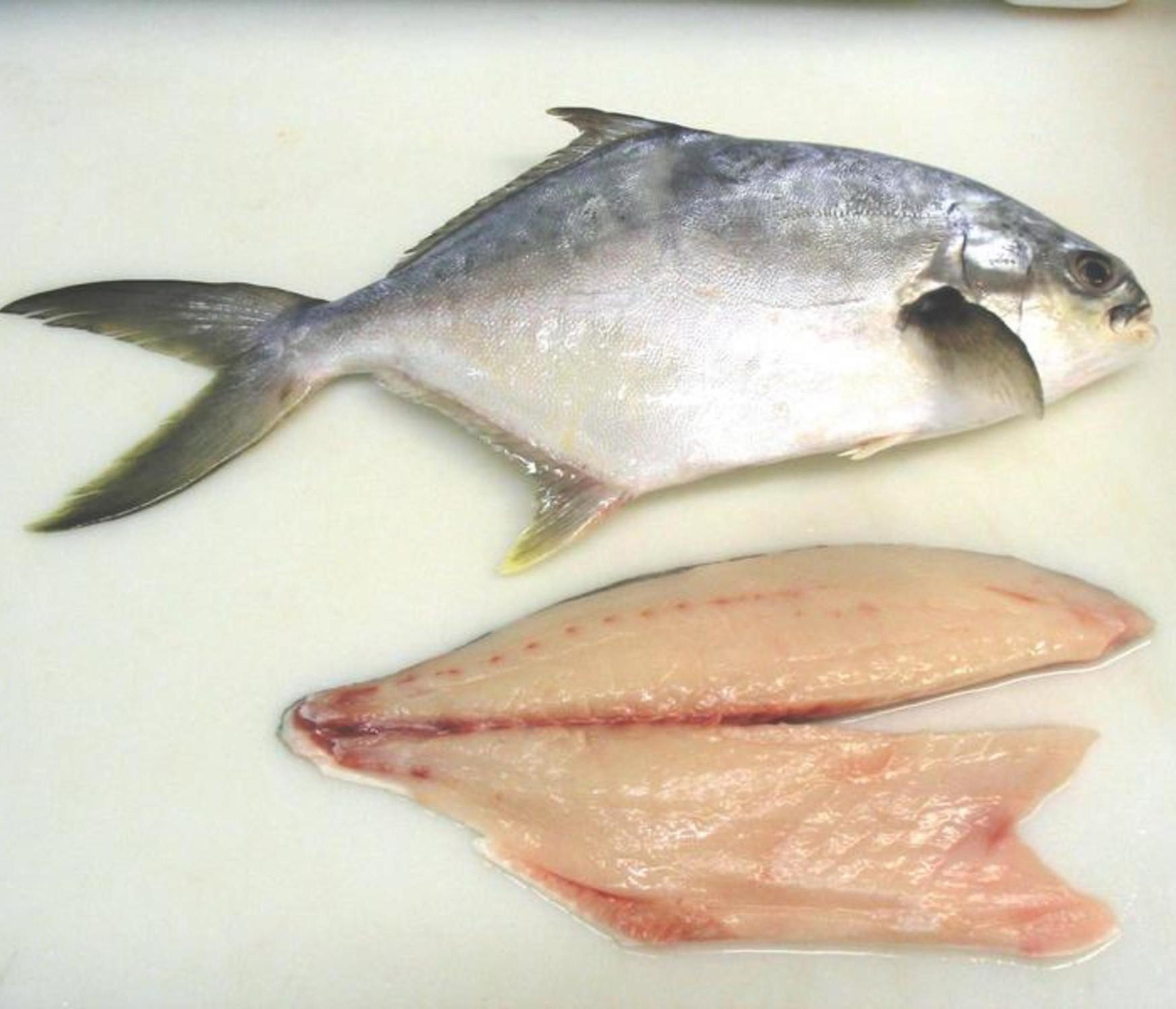 Pompano-fish-fillets