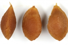 Prune-seeds