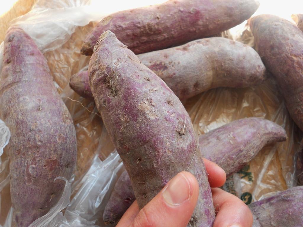 Purple-yam-root-Shen shu