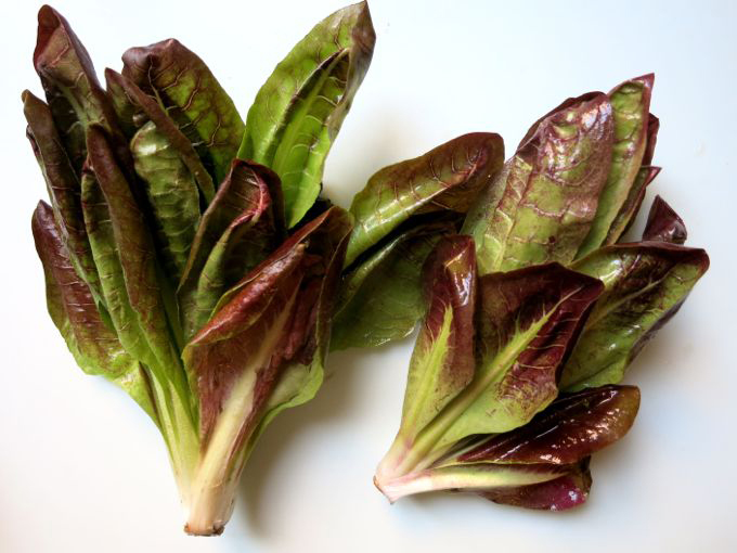 Leaves-of-Radicchio-plant