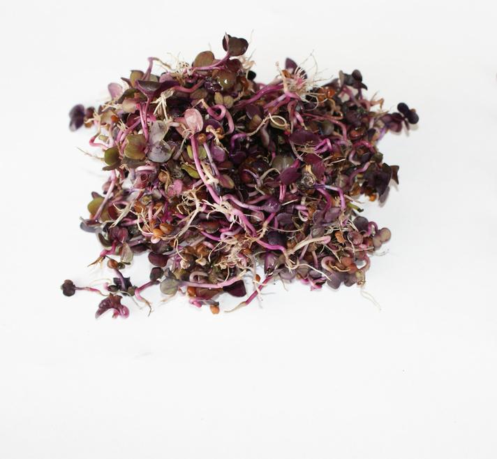 Radish-sprouts-2