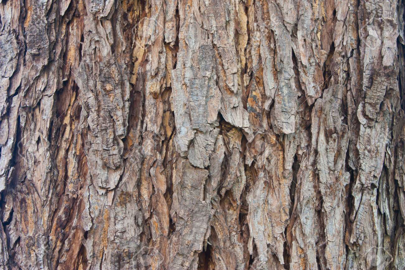 Bark-of-Rain-Tree