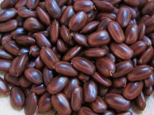 Seeds-of-Rain-Tree
