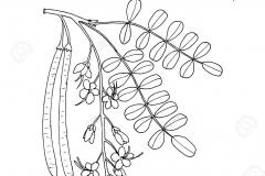 Sketch-of-Rain-Tree