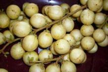 Ripe-Rambai-fruit