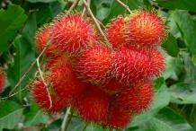 Unpeeled-Rambutan