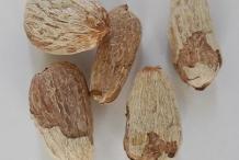 Seeds-of-Rambutan