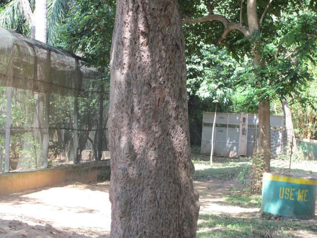 Bark-of-Red-Bead-Tree